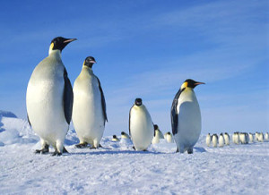 antarctica_featured