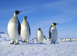 antarctica_featured